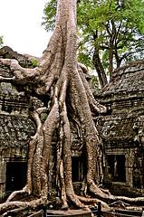 Cambodge: une histoire, une découverte, un voyage…