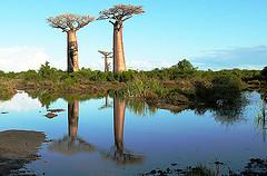 Madagascar pour les vacances