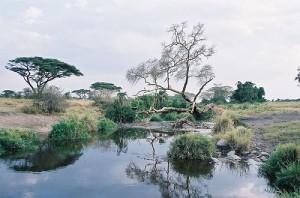 La Tanzanie pour destination de Voyage