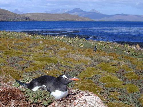 Voyage au coeur des îles Kerguelen