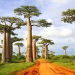 Première vue sur Madagascar
