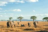 Un guide de voyage pour le Kenya et la Tanzanie