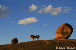 Tanzanie : Parc du Serengeti