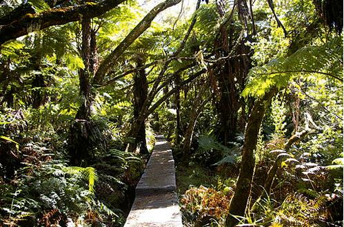 Chemin jusqu'au Trou de Fer, La Réunion