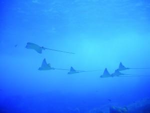 Partez plonger aux Seychelles avec Big Blue Divers