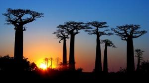 Partir en voyage humanitaire à Madagascar