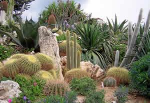 Le Jardin d'Eze, un joyau exotique sur la Côte d'Azur