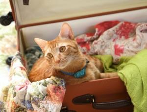 Astuces pour organiser les vacances avec son chat