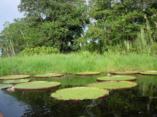 Iquitos_Flore (4)