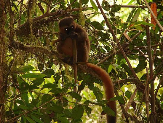 Partir en vacances à Madagascar les lieux à découvrir