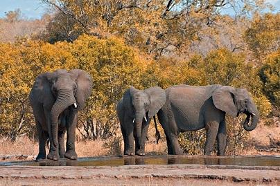 Les big five sont garantis dans plusieurs safaris Afrique