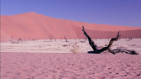 Parc national Namib Laukluft, une fierté de la Namibie