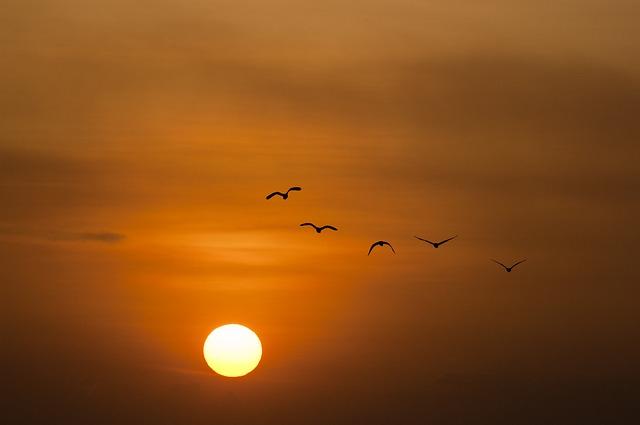 4 oiseaux à découvrir pendant son séjour aux Seychelles