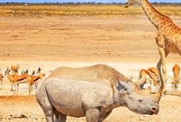 Partir pour un voyage aventure au Namibie