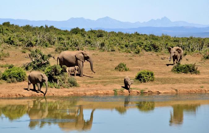 Team building en Afrique, quelles activités ?