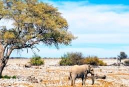 Les adresses incontournables de la Namibie