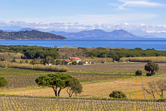 vignoble Saint Tropez