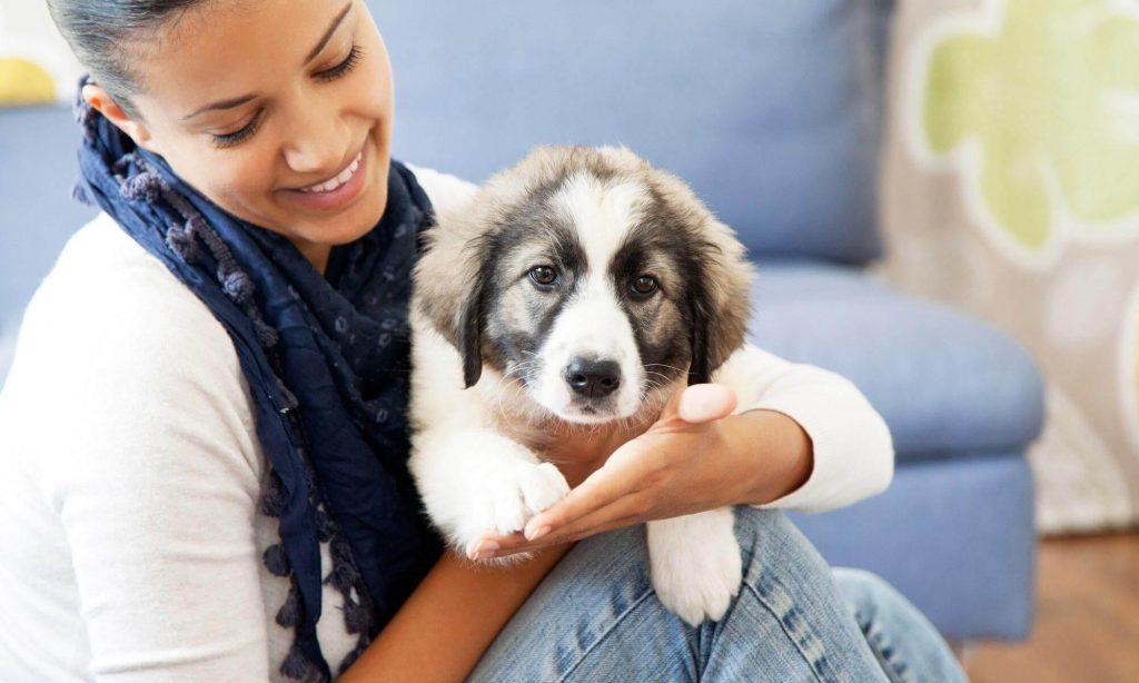 Les solutions pour garder vos chiens et vos chats pendant vos vacances
