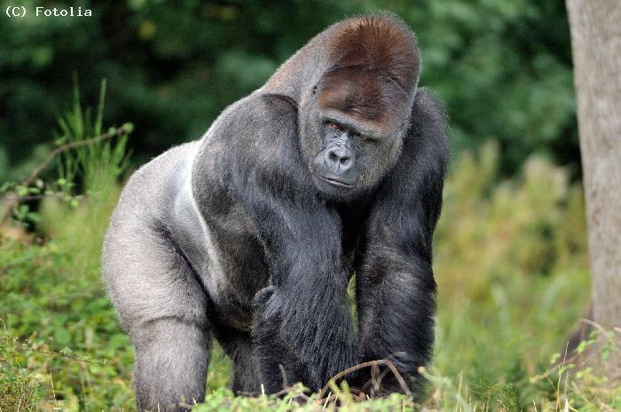 Voyager au Gabon au coeur de l'Afrique