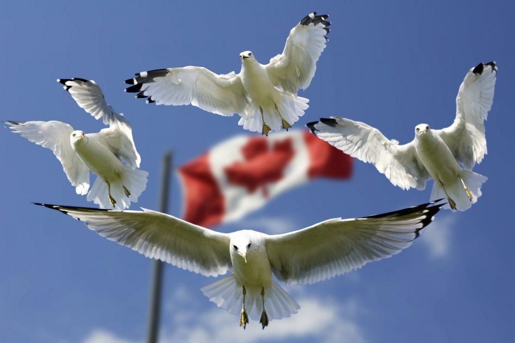 Visa Canada : zoom sur les visas de résident temporaire