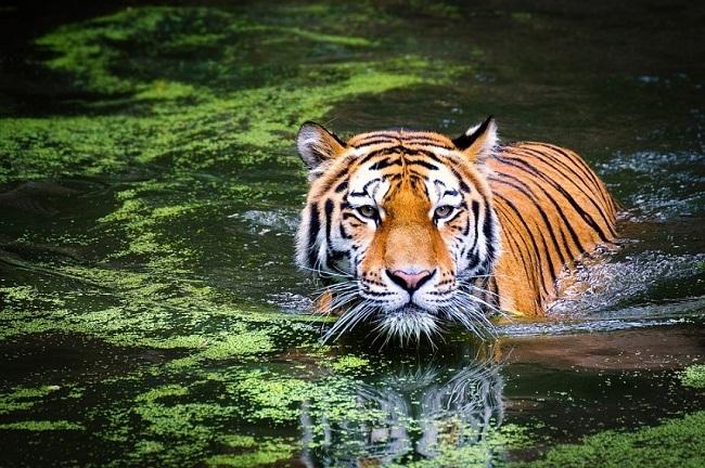 A la découverte de Népal et de ses parcs nationaux