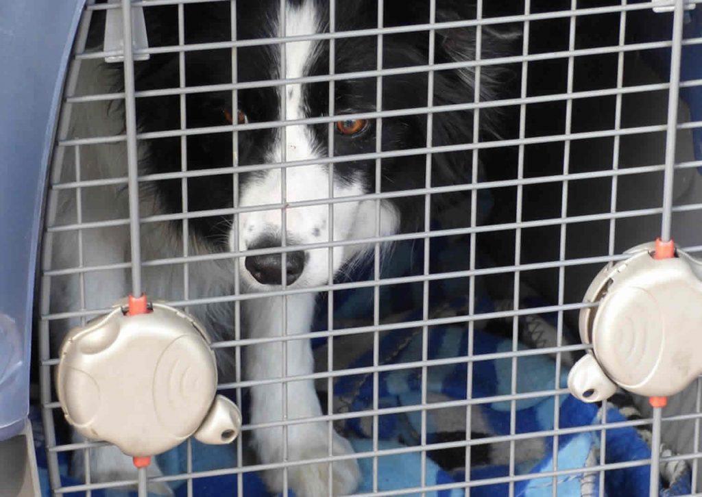 Voyager avec un chien : quelles sont les questions à se poser ?