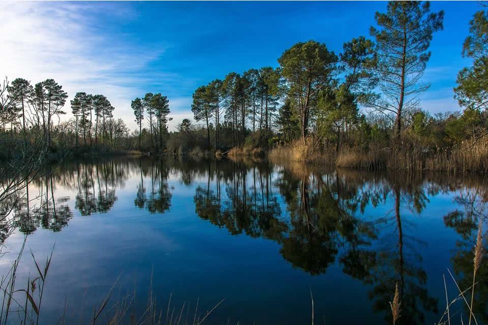 4 raisons fantastiques de visiter le bassin d'Arcachon