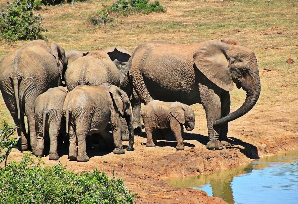 Bien organiser son séjour safari au parc Kruger