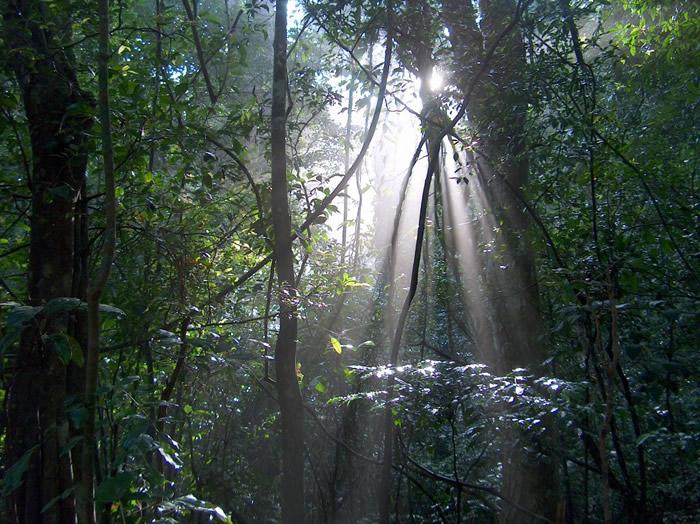Les réserves naturelles à découvrir au Sri Lanka
