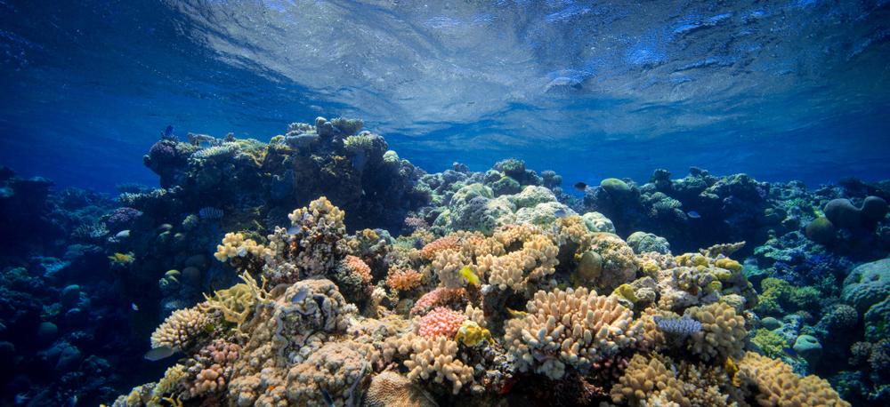 grande-barrière-de-corail-header
