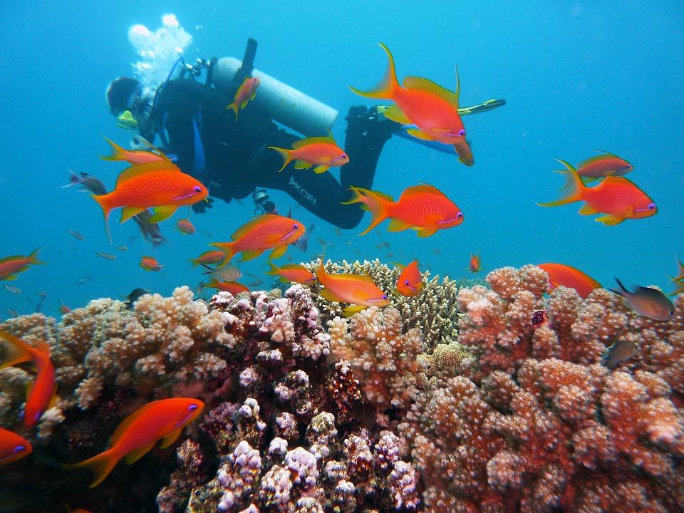 Les trois meilleurs sites de plongée en Croatie
