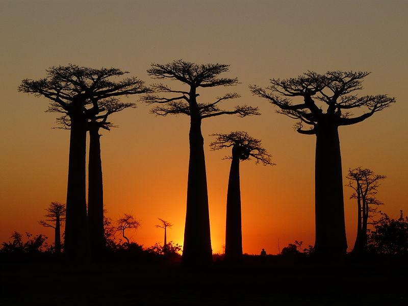 Morondava : la ville de l'exploration complète à Madagascar
