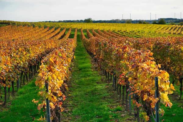 L'œnotourisme à Lyon et sa région pour les amateurs de vins.